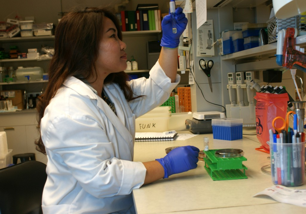 Paulynne Bellen, third-year veterinary student at The Ohio State College of Veterinary Medicine, analyzes a sample of raw pet food for foodborne pathogens as part of a study funded by the college's Veterinary Scholar Summer Research Program