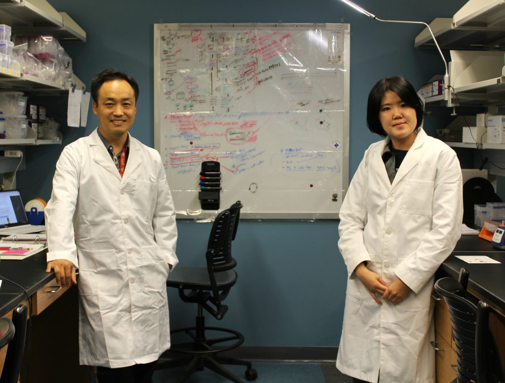 From left: Dr. Sanggu Kim, assistant professor at The Ohio State University College of Veterinary Medicine and Dr. Hannah Yu, postdoctoral fellow, stand in their lab in the College of Veterinary Medicine's Center for Retrovirus Research on May 10, 2016. Columbus, Ohio.
