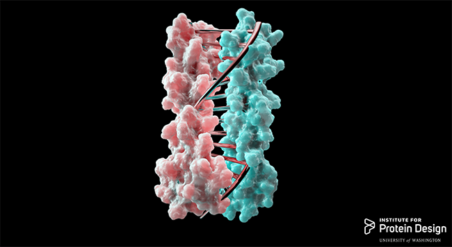 Image courtesy University of Washington Institute for Protein Design