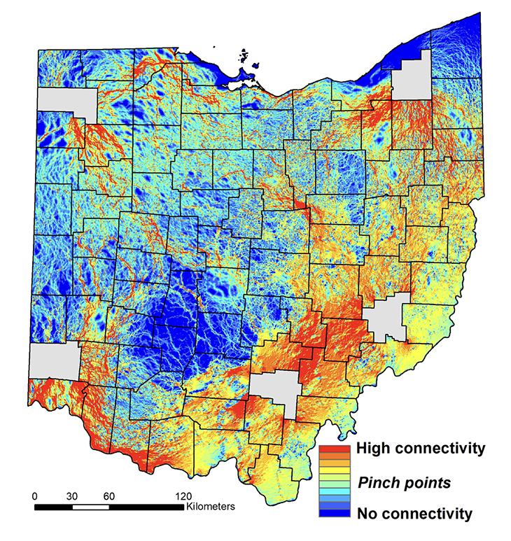 Bobcat habitat suitability map, courtesy Ohio University Popescu lab.
